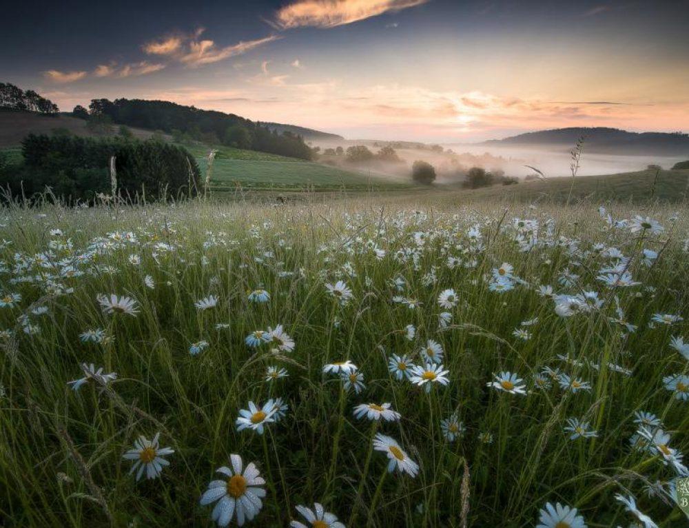 Odenwald, remanso de leyendas y paz